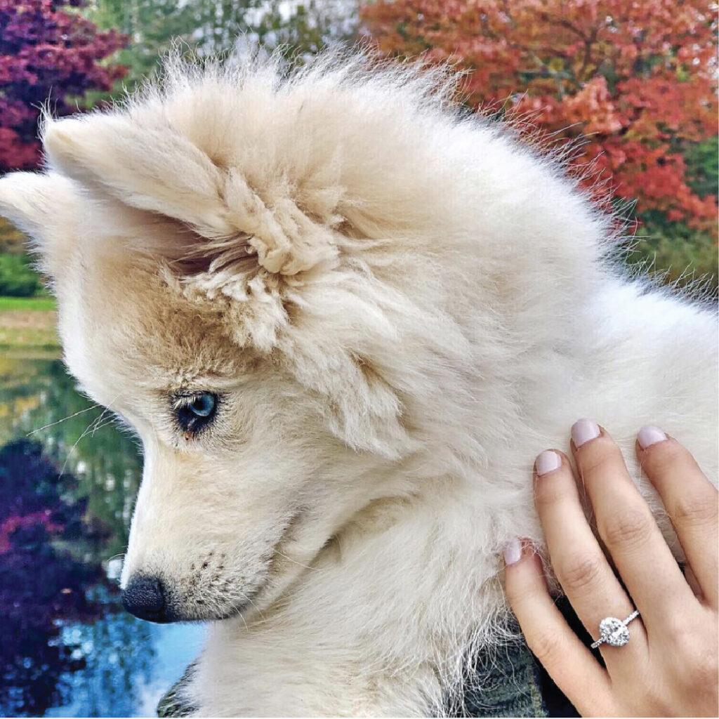 Danielle & Patrick - Puppy Proposal